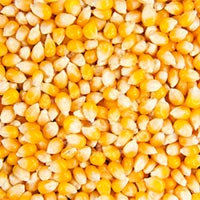 Corn, Maize