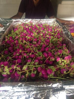 Fresh Vadamalli Flowers Supplier/Manufacture/Exporters In India