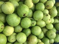 Fresh Fruits Guava