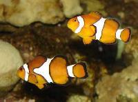 Marine Aquarium 002