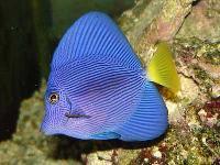 Marine Aquarium 003