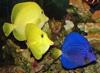 Marine Aquarium 006