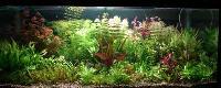 Planted Aquarium 001