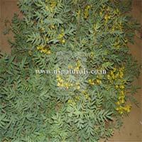 Senna Leaf Extract 20%