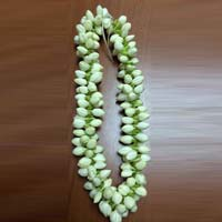 Chinese Jasmine Flowers
