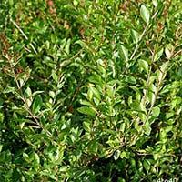 Herbal Natural Henna