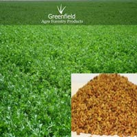 Alfalfa ( Lucerne ), Grass Seeds ( Medicago Sativa )