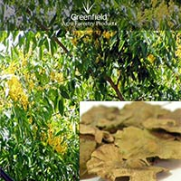 Bija Forestry Tree Seeds ( Pterocarpus Marsupium )