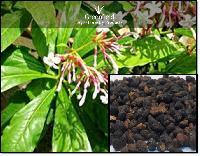 Sarpgandha Medicinal Seeds ( Rauvolfia Serpentina )