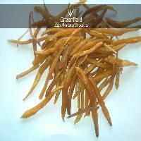Yellow Shatavari Roots  ( Asparagus Racemosus )