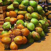 Fresh Green Coconuts, Tender Coconuts