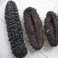 Dried Sea Cucumber for Sale
