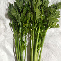 Celery Leaves  Powder