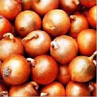 Fresh Nasik Onion
