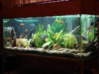 Hobby Fish Tank
