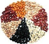 Kidney Beans - Rajma