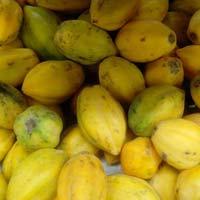 Fresh Fruits Papaya - Carica