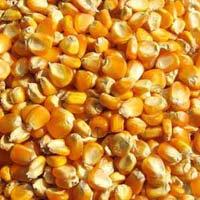 Maize (mecca)