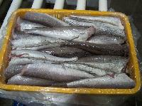 Frozen Pacific Hake Merluccius Products