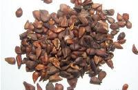 Herbal Seed
