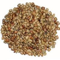 Medicinal Plant Seed