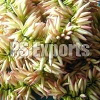 Fresh Jathi Malligai Flower