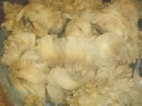 Sheep Raw Wool