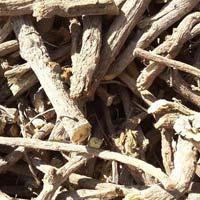 Glycyrrhiza Glabra (l.) Licorice (sweet Bouy) (mulethi)