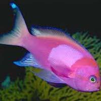 Fresh Sea Fishes