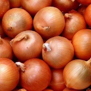 Fresh Brown Onion