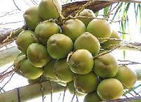 Raw Coconuts