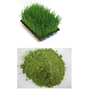 Bermuda Grass Powder (cynodon Dactylon)