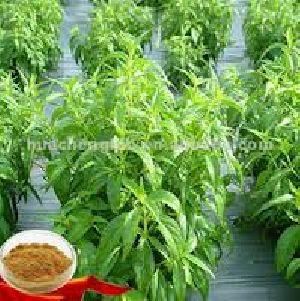 Green Chiretta Powder (andrographis Paniculata)