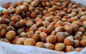 Organic Raw Hazelnut Without Shell