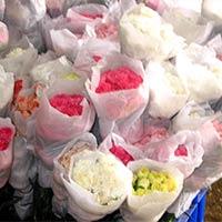 Fresh Carnation Flowers