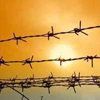 Steel Fencing Wires