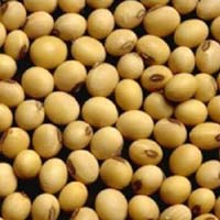 Soya Lecithin Seeds