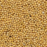 High Quality Mustard Seeds