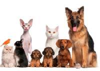 Generic Veterinary Medicines