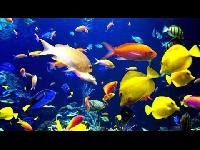 Fishes Aquarium