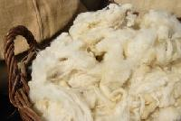 Carpet Raw Wool