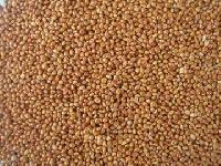 Red Millets