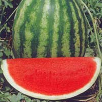 Nena F1 Watermelon Seeds