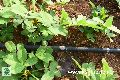 Farm Drip Irrigation System