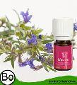 Hyssop Organic Essential Oil