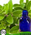 Marjoram Organic Essential Oil
