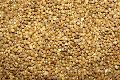Indian Millet Seed