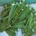 Natural Aloe Vera Leaves