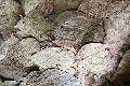 Herbal Dried Betel Leaves