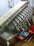 Automatic Grading & Filth Washing System for Shrimps PUD variety (Capacity- 450 to 500 kg. per hr.)